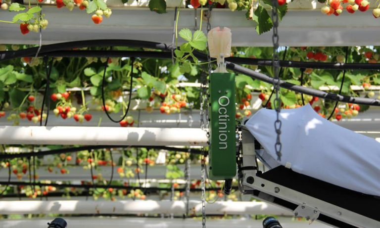 Strawberry picker- Octinion